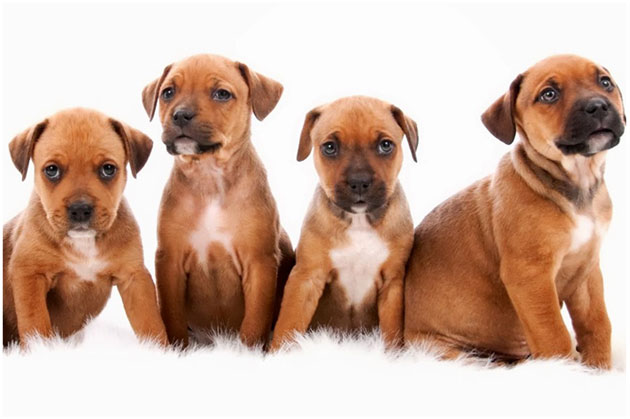 Best 4 Tips to Remove Pet Stains and Odor from Carpet